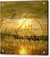Golden Sunset Acrylic Print