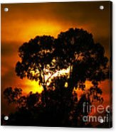 Golden Sunset... Acrylic Print