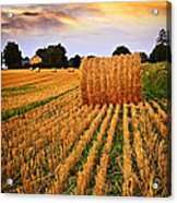 Golden Sunset Over Farm Field In Ontario Acrylic Print by Elena Elisseeva