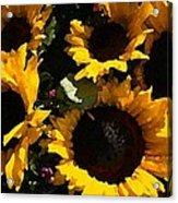 Golden Sunshine Acrylic Print by Cole Black