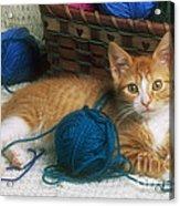 Golden Tabby Kitten Acrylic Print