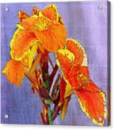 Golden Torch Ginger Acrylic Print
