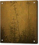 Golden Trees In Winter Acrylic Print