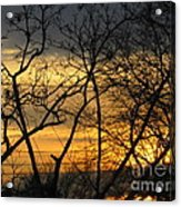 Golden Twilight 2 Acrylic Print