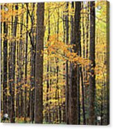 Golden View Acrylic Print