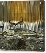 Golden Waterfalls Acrylic Print