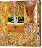 Golden Weeping Birch Tree Collage Acrylic Print