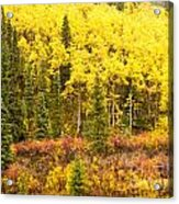 Golden Yellow Fall Boreal Forest In Yukon Canada Acrylic Print