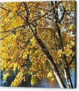 Golden Zen Acrylic Print