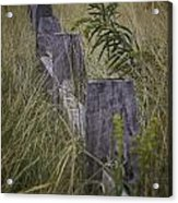 Goldenrod By The Fence Acrylic Print