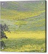 Goldenrod Oak Santa Ynez California 3 Acrylic Print