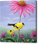 Goldfinch And Coneflowers Acrylic Print