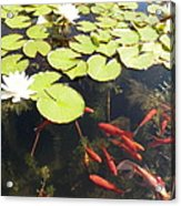 Goldfish And Water Lily 1 Acrylic Print