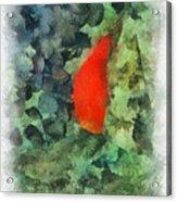 Goldfish Photo Art 04 Acrylic Print