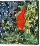 Goldfish Photo Art 05 Acrylic Print