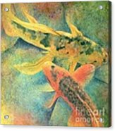 Goldfish Acrylic Print by Robert Hooper