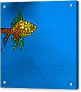 Goldfish Study 4 - Stone Rock'd Art By Sharon Cummings Acrylic Print