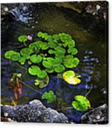 Goldfish With Lily Pads Acrylic Print