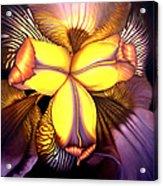 Goldie's Iris Acrylic Print