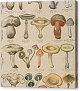 Good And Bad Mushrooms Acrylic Print