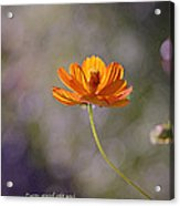 Good And Perfect Gifts Acrylic Print