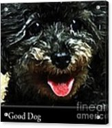 Good Dog . Affiche Acrylic Print