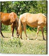Marble Falls Texas In Good Grass Acrylic Print