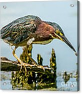 Good Green Fisher Acrylic Print