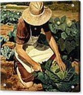 Good Harvest Acrylic Print