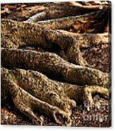 Good Roots Acrylic Print by Claudette Bujold-Poirier