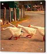 Goose Crossing Acrylic Print by Michael Pickett