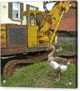 Goose Guard Acrylic Print