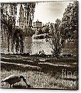 Goose In Central Park Nyc Acrylic Print