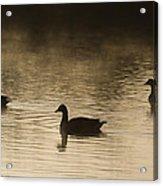 Goose Silhouette Acrylic Print