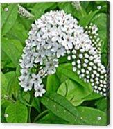Gooseneck Flower Acrylic Print by Aimee L Maher Photography and Art Visit ALMGallerydotcom