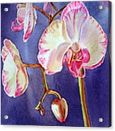 Gorgeous Orchid Acrylic Print