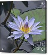 Gorgeous Pale Lavender Water Lily Acrylic Print
