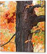 Gorgeous Tree Acrylic Print