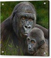 Gorilla And Baby Acrylic Print
