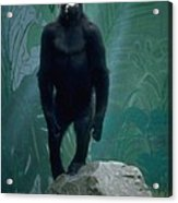 Gorilla Rock Acrylic Print