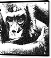 Gorilla Vogue Acrylic Print