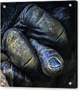 Gorilla's Hand Acrylic Print