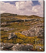 Gorse And Heather Acrylic Print