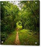 Gosnell Big Woods Trail Acrylic Print