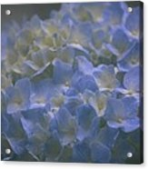Got The Blues For You Acrylic Print