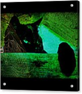 Gothic Black Cat Acrylic Print