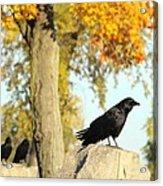 Three Ravens On A Gothic Graveyard Day Acrylic Print