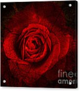 Gothic Red Rose Acrylic Print