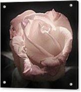 Gothic Rose Acrylic Print