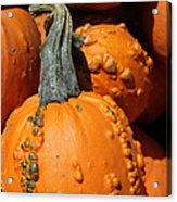 Gourd Acrylic Print